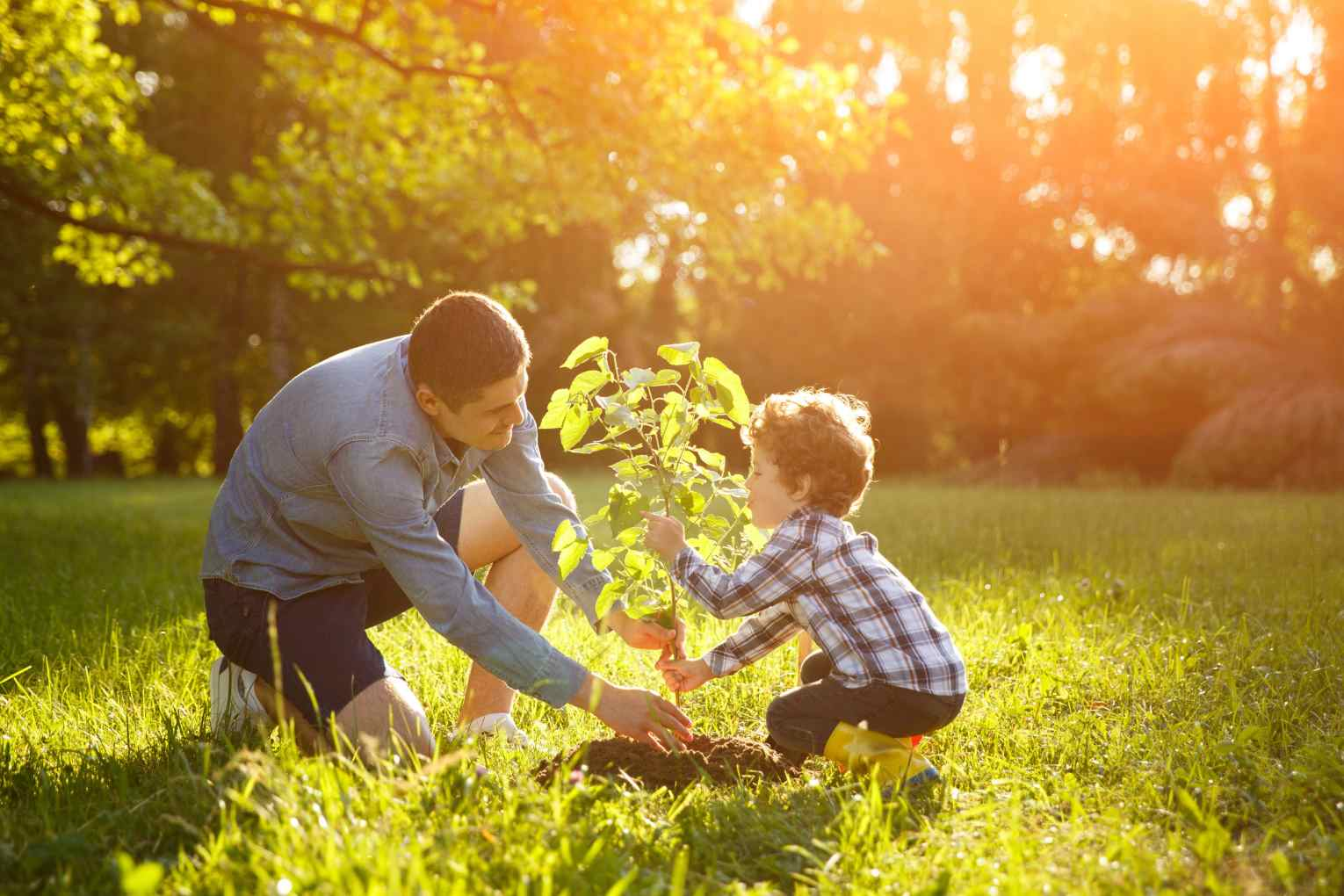 man planting with son